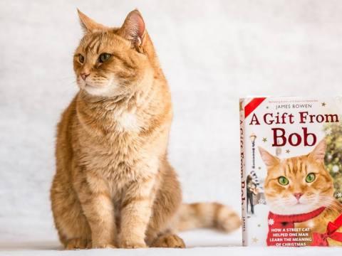 Нова книга за Боб